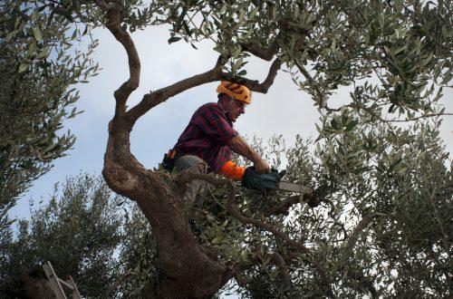 atlanta area tree service