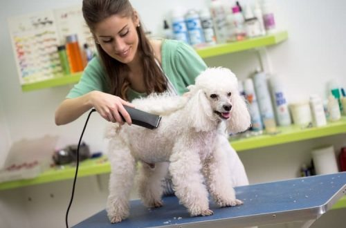 mobile pet grooming pembroke pines